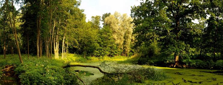 Как возникают болота. Этапы формирования.